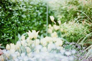花の写真・画像素材[315483]