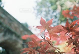 花 - No.315501
