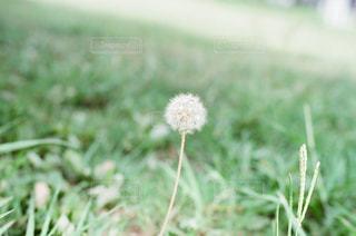 植物 - No.385864
