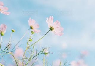 花の写真・画像素材[385866]