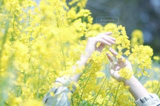 花の写真・画像素材[411839]