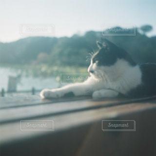 猫の写真・画像素材[476860]
