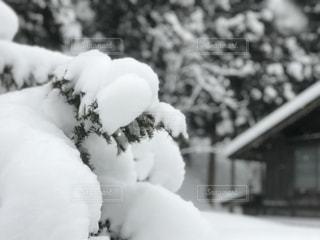 雪の中で黒い熊の写真・画像素材[1027001]
