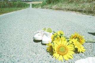草の中の黄色い花の写真・画像素材[1325153]