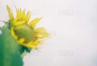 近くに黄色い花のアップの写真・画像素材[1325154]