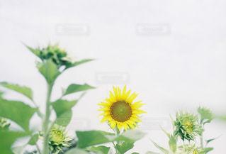 近くの花のアップの写真・画像素材[1325155]