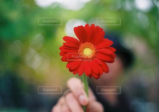 近くの花のアップの写真・画像素材[1710357]