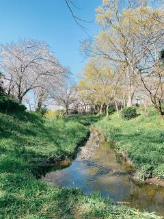 水の体の隣にある木の写真・画像素材[3099596]