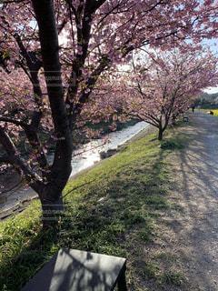 公園の木の写真・画像素材[3099597]
