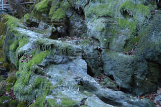 自然の写真・画像素材[278017]
