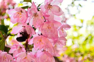 春の写真・画像素材[472680]