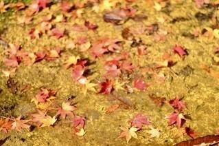 花をクローズアップの写真・画像素材[2693671]