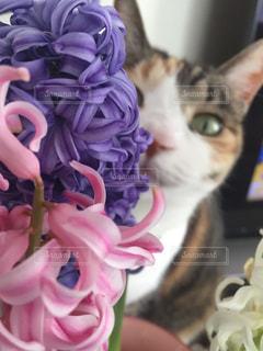 猫の写真・画像素材[266177]