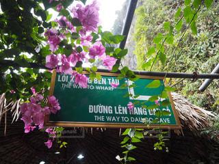 ベトナム - No.289357