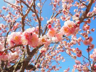 春の写真・画像素材[340799]