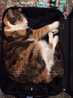 猫の写真・画像素材[347140]