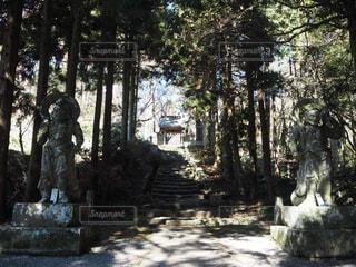 森の写真・画像素材[347142]