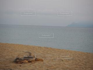 海の写真・画像素材[532691]