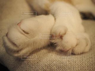 ベッドの上で眠っている猫の写真・画像素材[739034]
