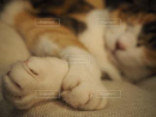 白い面の上に横たわる猫の写真・画像素材[739035]