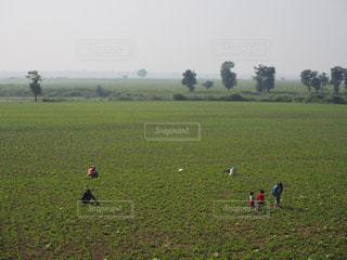 緑豊かな緑のフィールドに立つ人々 のグループの写真・画像素材[971144]