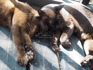 ベッドの上で横になっている猫の写真・画像素材[971151]