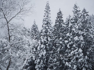 雪に覆われた木の写真・画像素材[1023628]