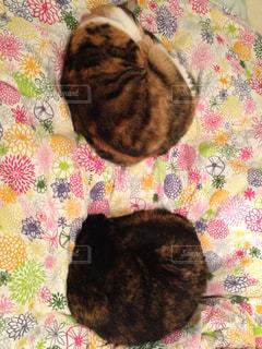 ベッドの上で横になっている猫の写真・画像素材[1400390]