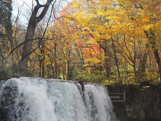 森の中の滝の写真・画像素材[1589449]