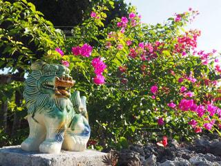 竹富島のシーサーの写真・画像素材[1688781]