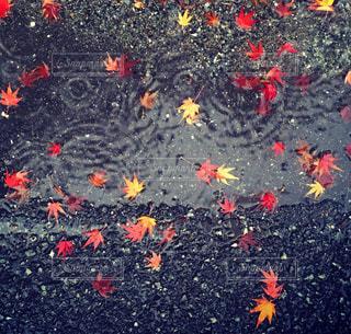 秋の写真・画像素材[298991]