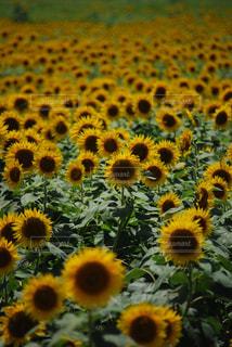花の写真・画像素材[652705]