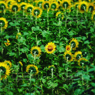 花の写真・画像素材[652708]