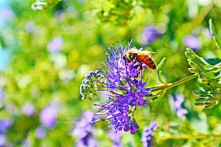 蜂と花の写真・画像素材[269259]