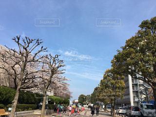 花見 - No.429389