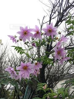 花の写真・画像素材[266572]