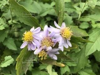 近くの花のアップ - No.923559