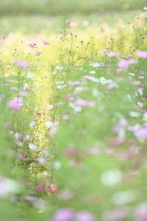 自然の写真・画像素材[5170]