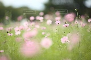 自然の写真・画像素材[5167]