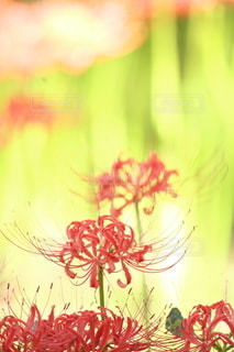 自然の写真・画像素材[5158]