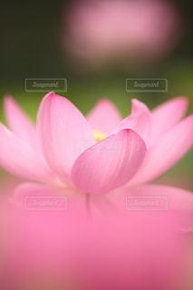 自然の写真・画像素材[5153]