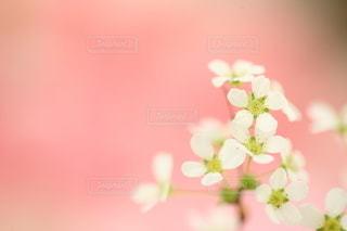 自然の写真・画像素材[5145]