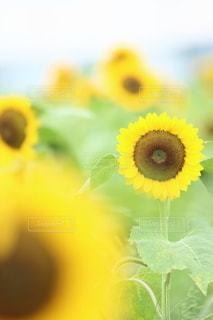 花の写真・画像素材[5140]