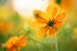 自然の写真・画像素材[5138]