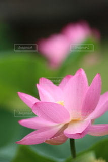 自然の写真・画像素材[5135]