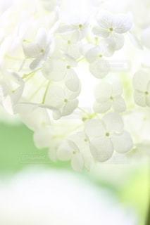 自然の写真・画像素材[5134]