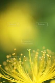 自然の写真・画像素材[5133]
