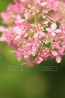 自然の写真・画像素材[5132]
