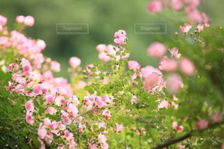 自然の写真・画像素材[5123]