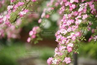 自然の写真・画像素材[5119]